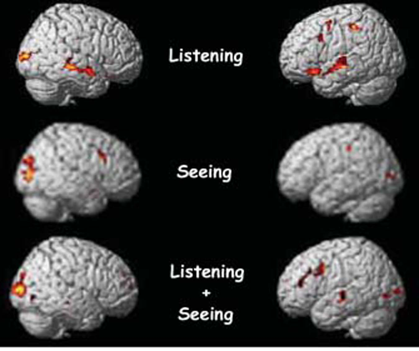 fMRI of multitasking