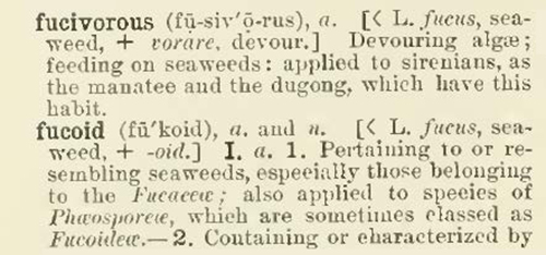 The Century Dictionary (1889) skips from fucivorous to fucoid, two words the editors found more appropriate to define than fuck