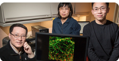 Researchers have improved the process of converting stem cells into motor neurons.