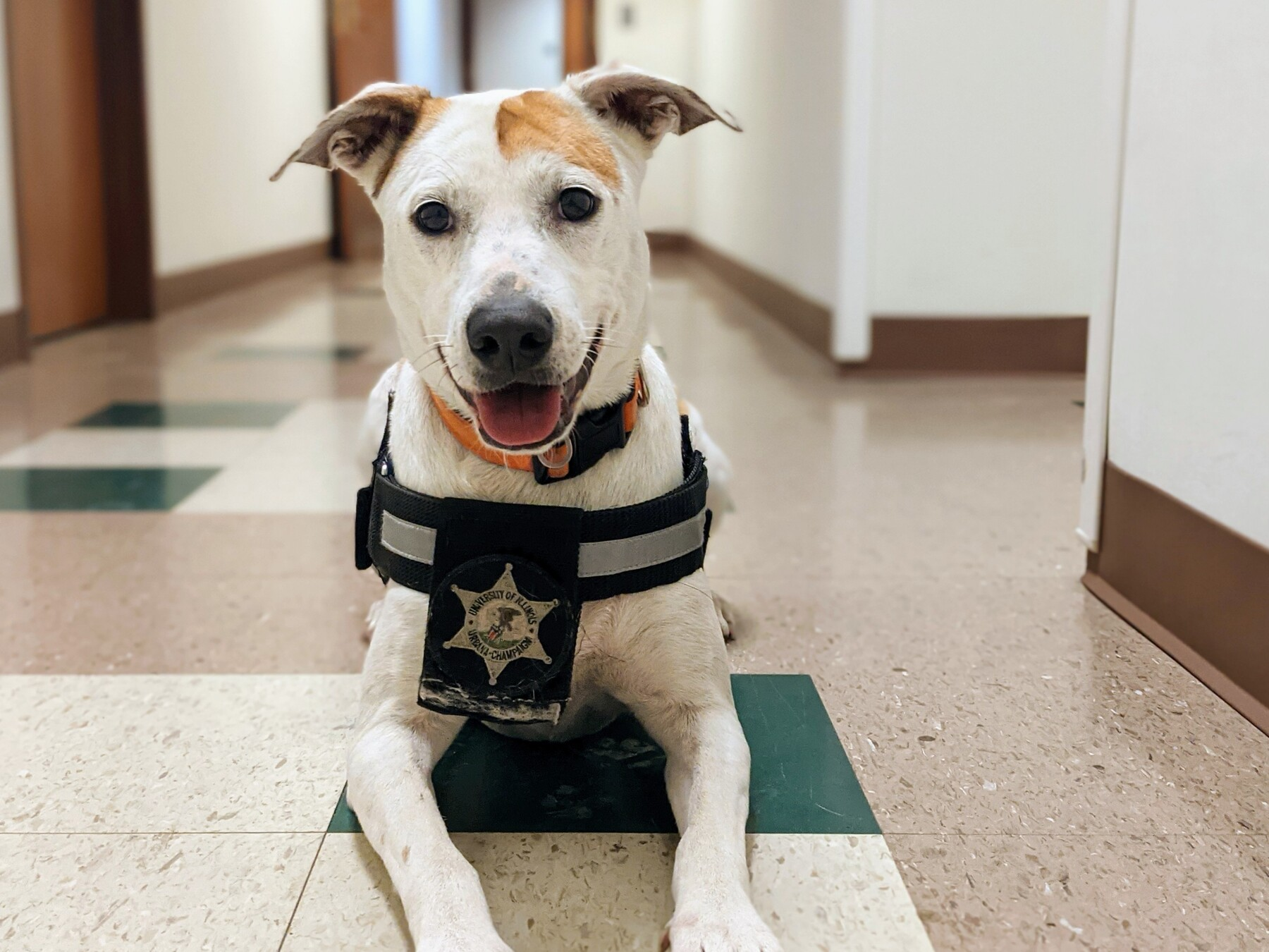 K9 Lollipop poses for a photo in a UIPD hallway.