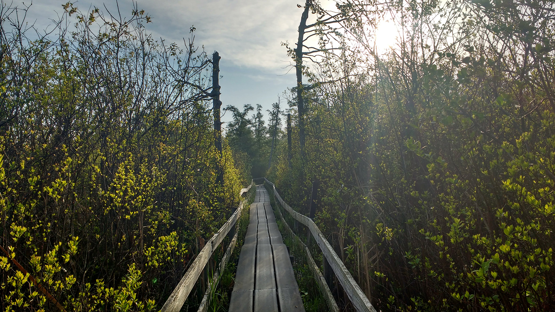a boardwalk at Volo Bog State Natural Area. Photo by Anastasia Rahlin