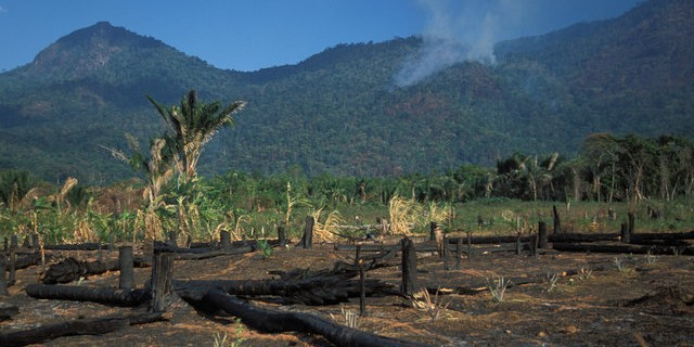 burned stumps and other vegetation at the site of deforestation