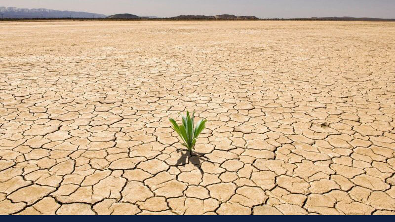 single plant grows on expanse of dry, cracked earth. Credit: Blend Images/Corbis