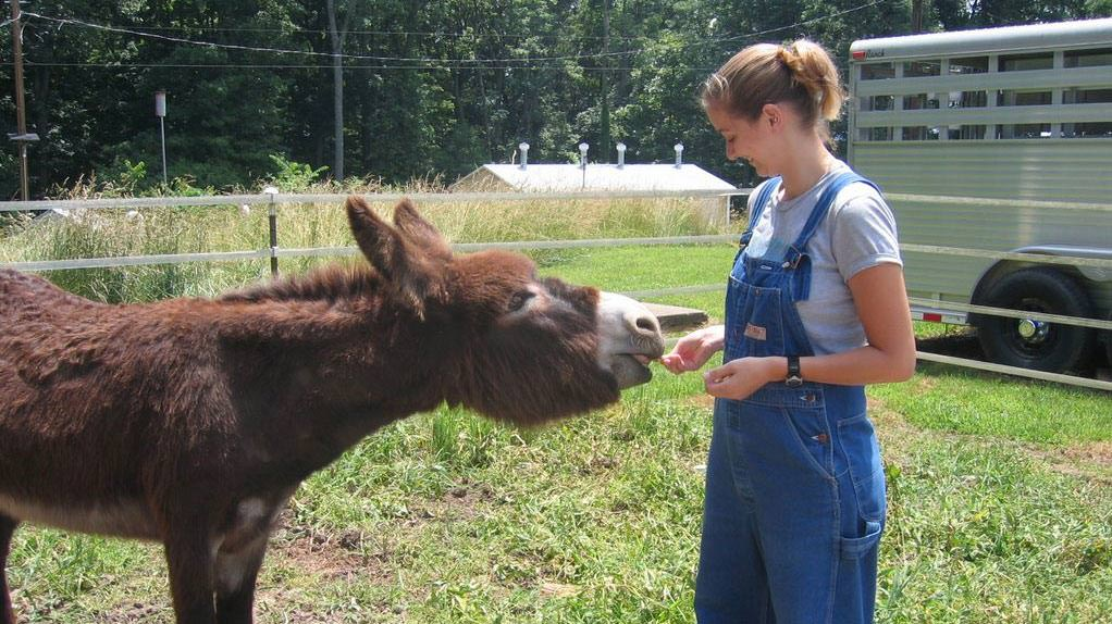 image of student with donkey at dixon springs agricultural center