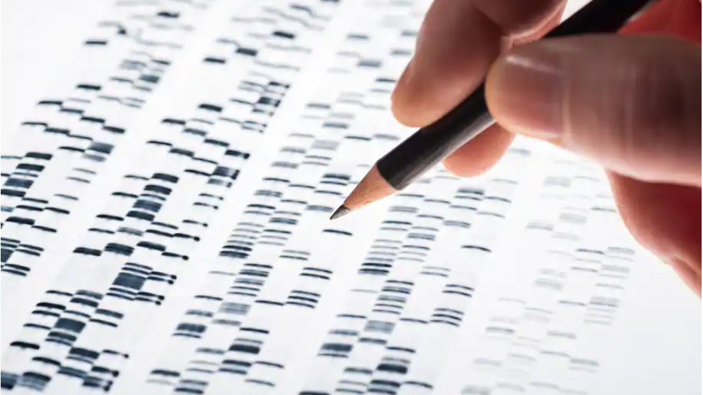 """The introduction of whole-genome sequencing and analysis called into question early studies about the existence of a """"warrior gene."""" image shows hand holding pencil over gene sequencing results.(Klaus Ohlenschlaeger/Alamy Stock Photo)"""