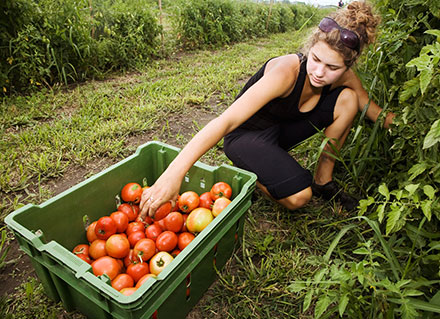 Image of student working at Illinois' Student Sustainable Farm