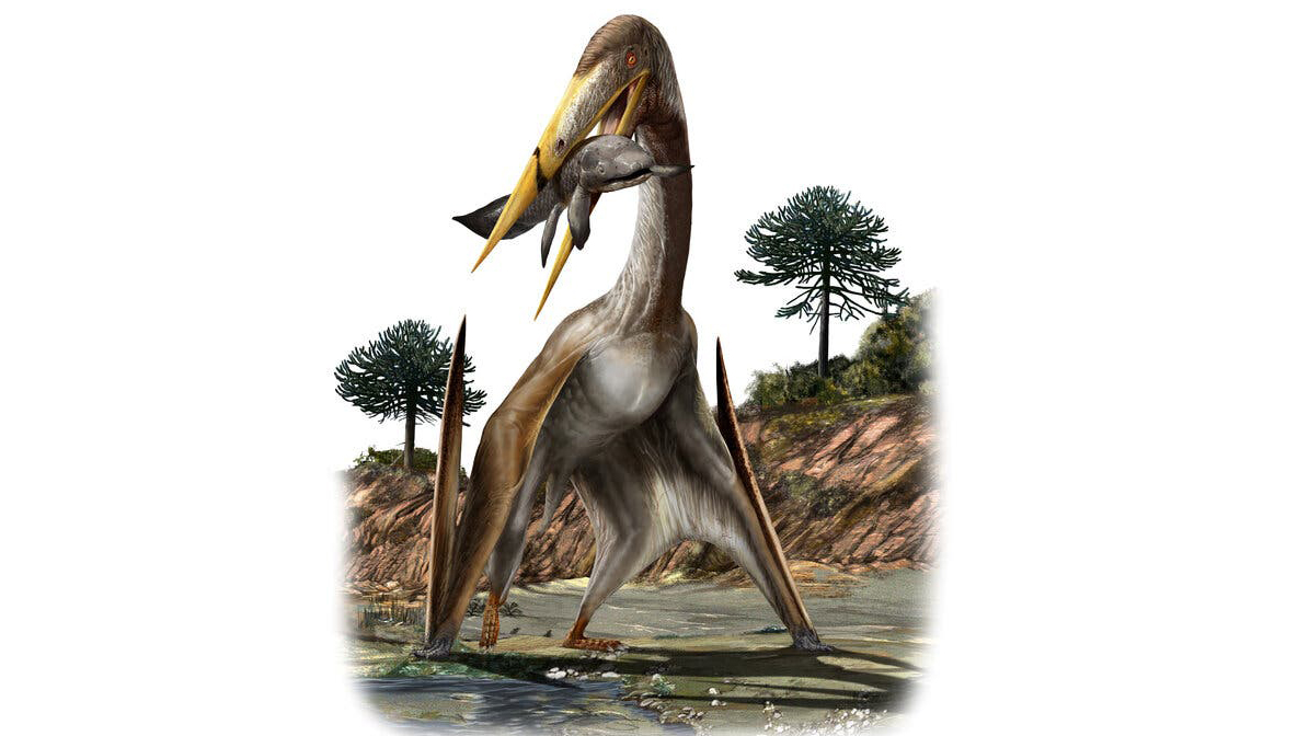 An artist's rendering of a pterosaur, whose complex neck structure has no parallel elsewhere in the animal kingdom.Credit...Williams et al., iScience