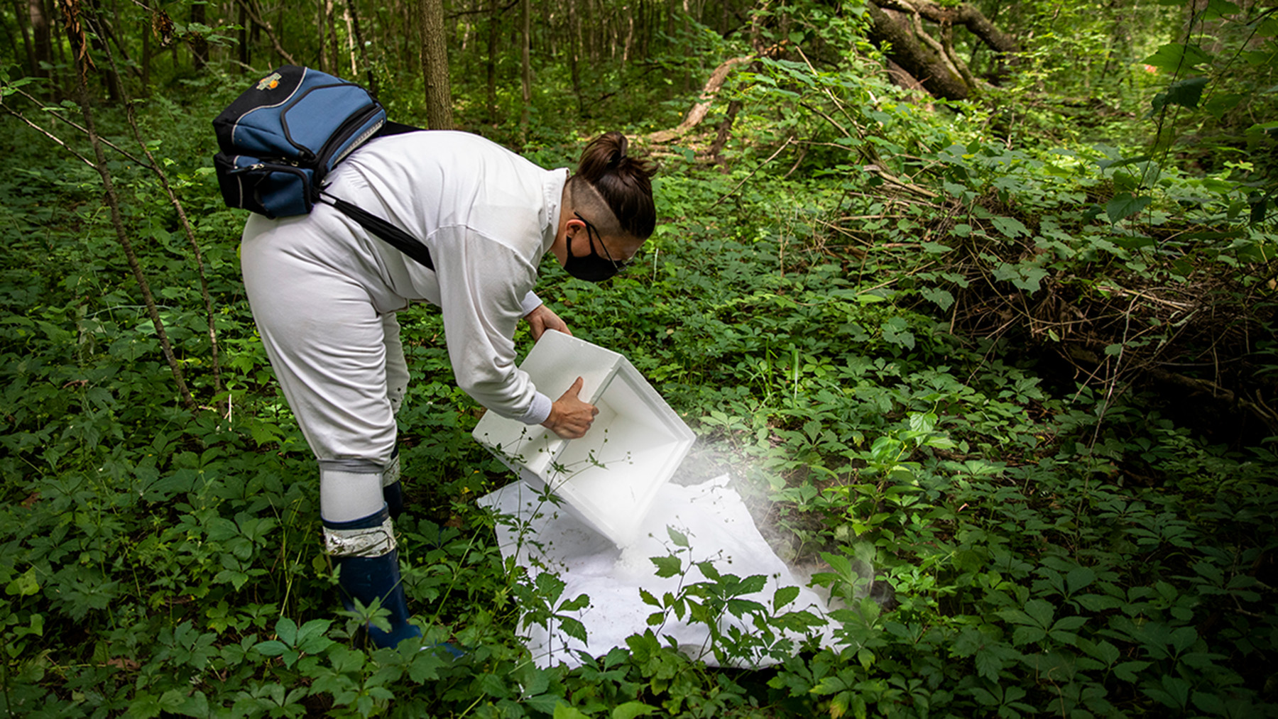 The author sets a trap for ticks with dry ice.  Photo by Fred Zwicky