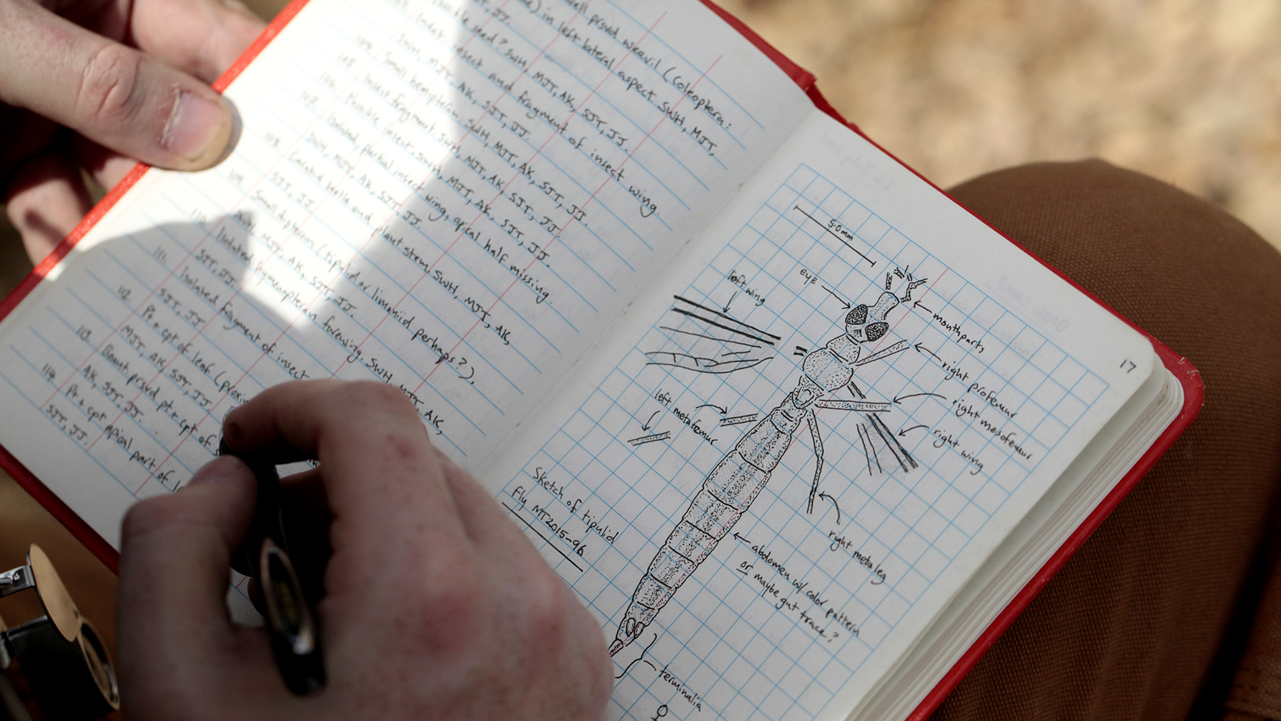 A page from Illinois paleontologist Sam Heads's notebook. Photo by Nathan Stariha