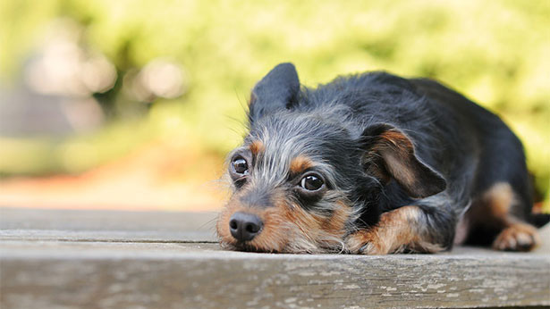 a very cute puppy. Photo provided by the College of Veterinary Medicine