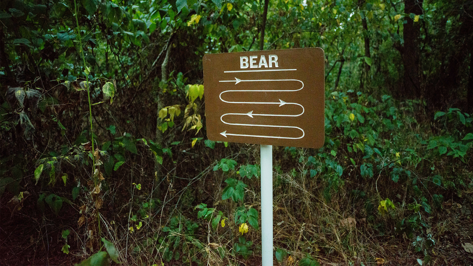 sign indicating the presence of bears. Photo by Valerie Oliveiro