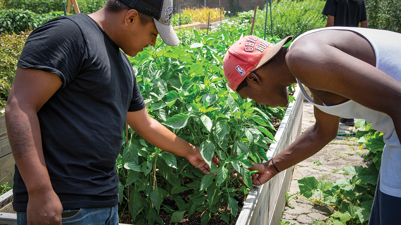 two young men work in an urban garden