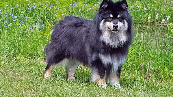 a dog named Toby. Photos courtesy of Nancy DaCosta