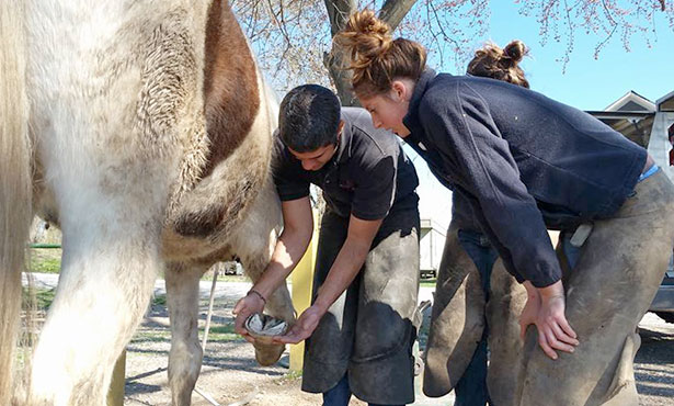 veterinary students inspect a horse's hoof. Photo provided by the college.