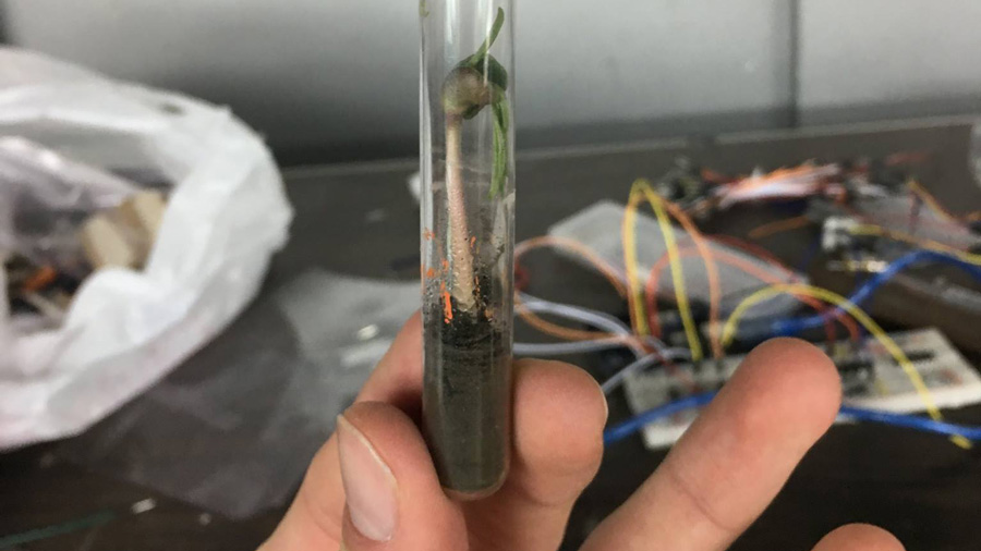 A test tube holding a blue lupine plant growing in a mix of fertilizer and simulated lunar soil. Credit: Image provided by Alex Darragh and Matt Steinlauf