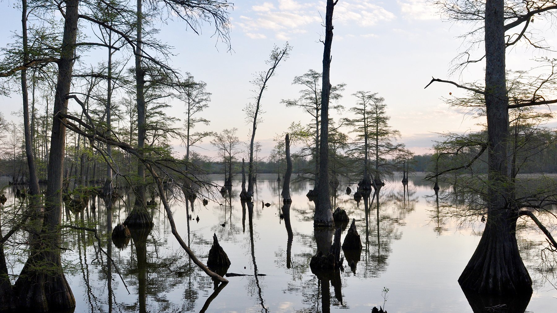 A cypress swamp near Snake Road in the Shawnee National Forest, near Harrisburg, Illinois. Photo by Mark A. Davis