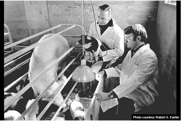 Former University President Robert Easter as a faculty member and swine researcher