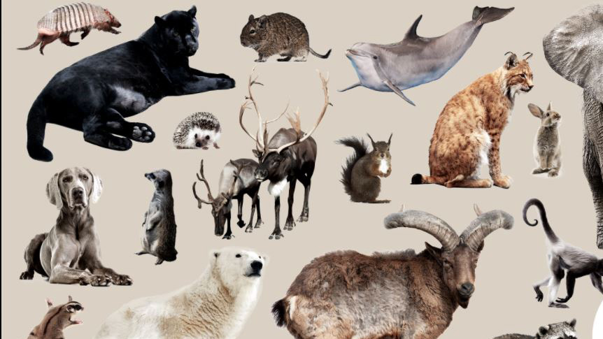 compaosite image of several animals in shades of brown, gray and black. Graphic: Elena Scotti (Photos: Shutterstock, Getty Images)