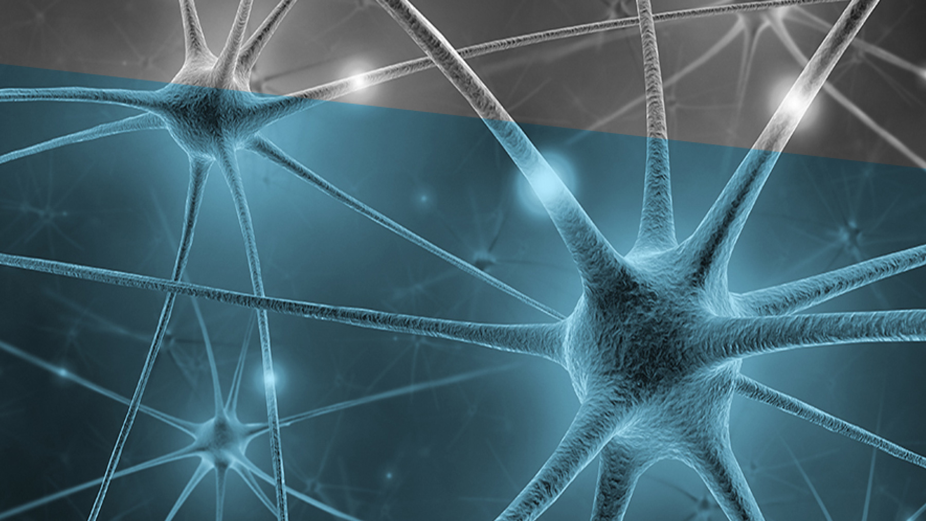 Brain synapses. Image supplied by IHSI