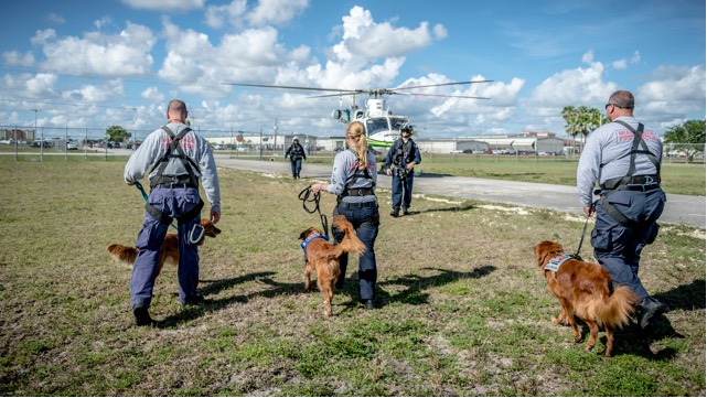 search and rescue dogs approach a helicopter that will whisk them to the site of calamity