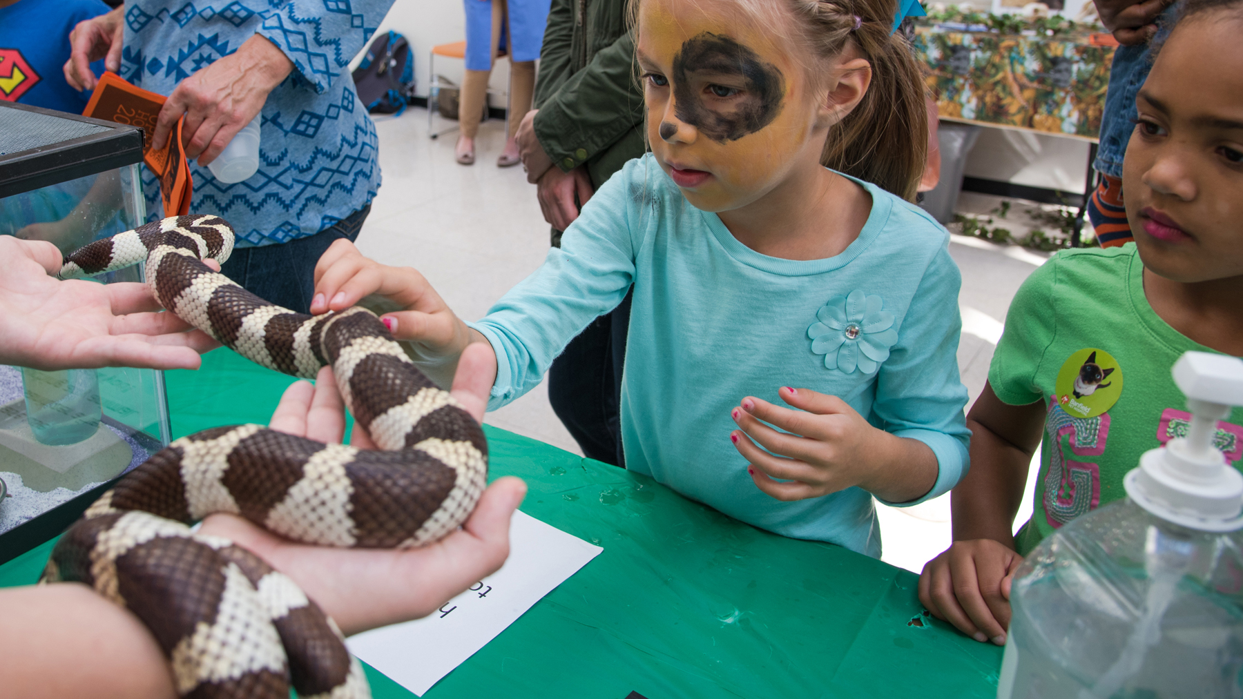 young girl, with dog face paint, touches a snake at a previous Veterinary Medicine Open House