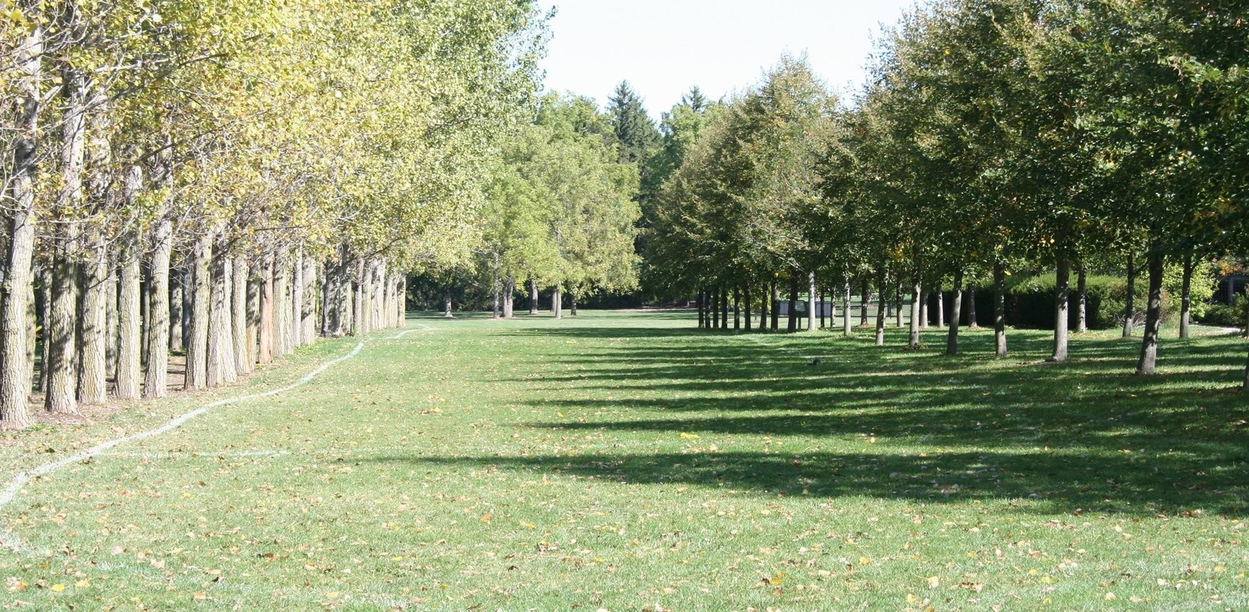 a grassy field at the Arboretum