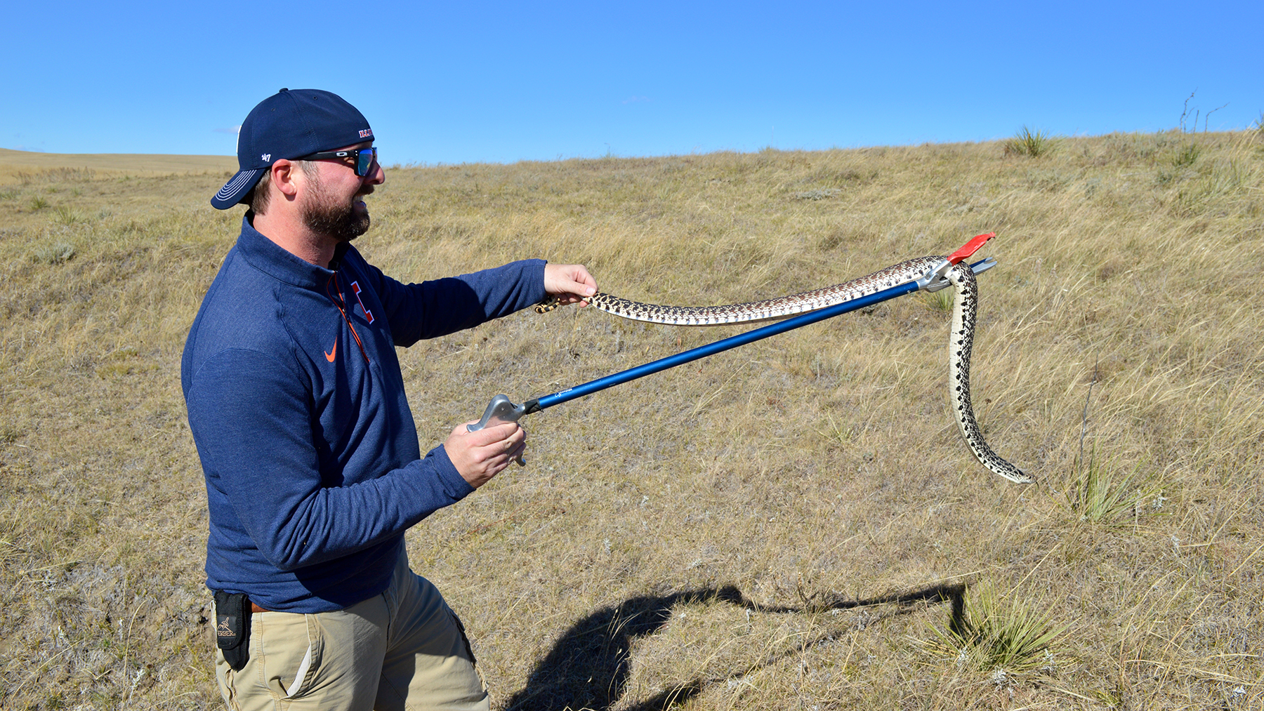 Mark Davis handles a feisty bullsnake. Rattlesnakes, racers, bullsnakes and other species overwinter together in the same hibernaculum. Photo by Matt Smith