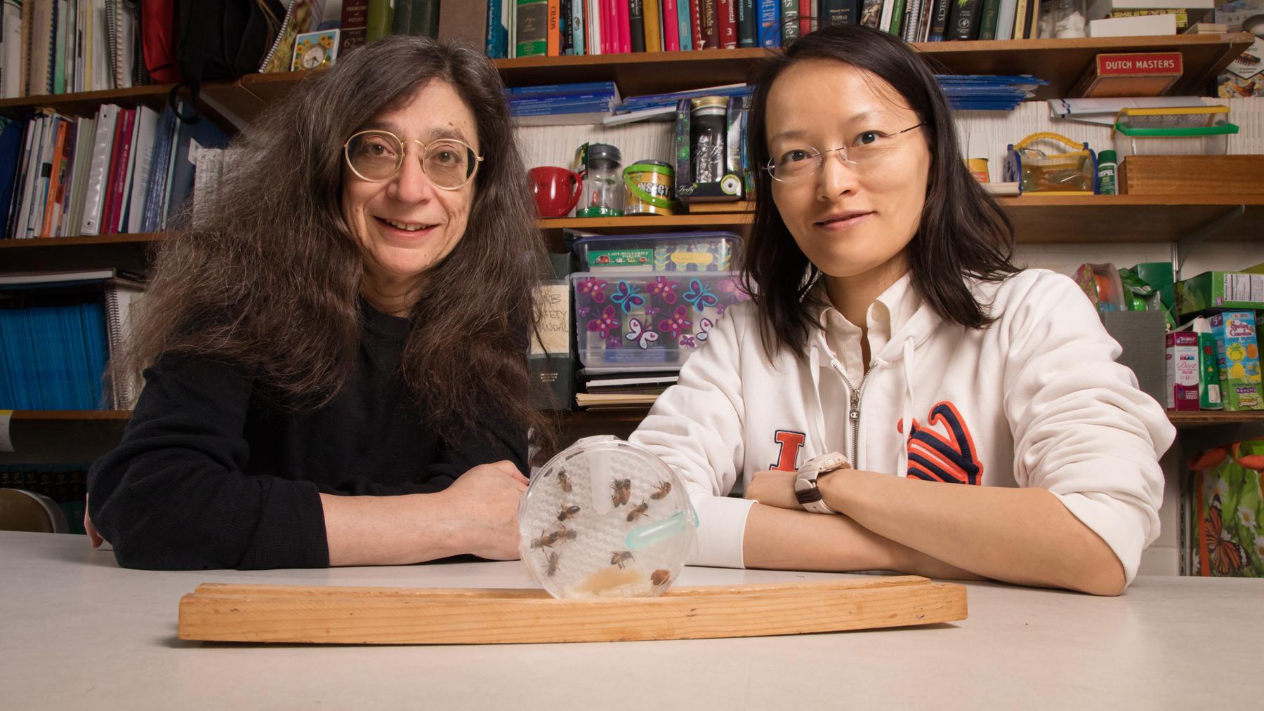 Entomology professor May Berenbaum and postdoctoral researcher Ling-Hsiu Liao. Photo by L. B. Stauffer