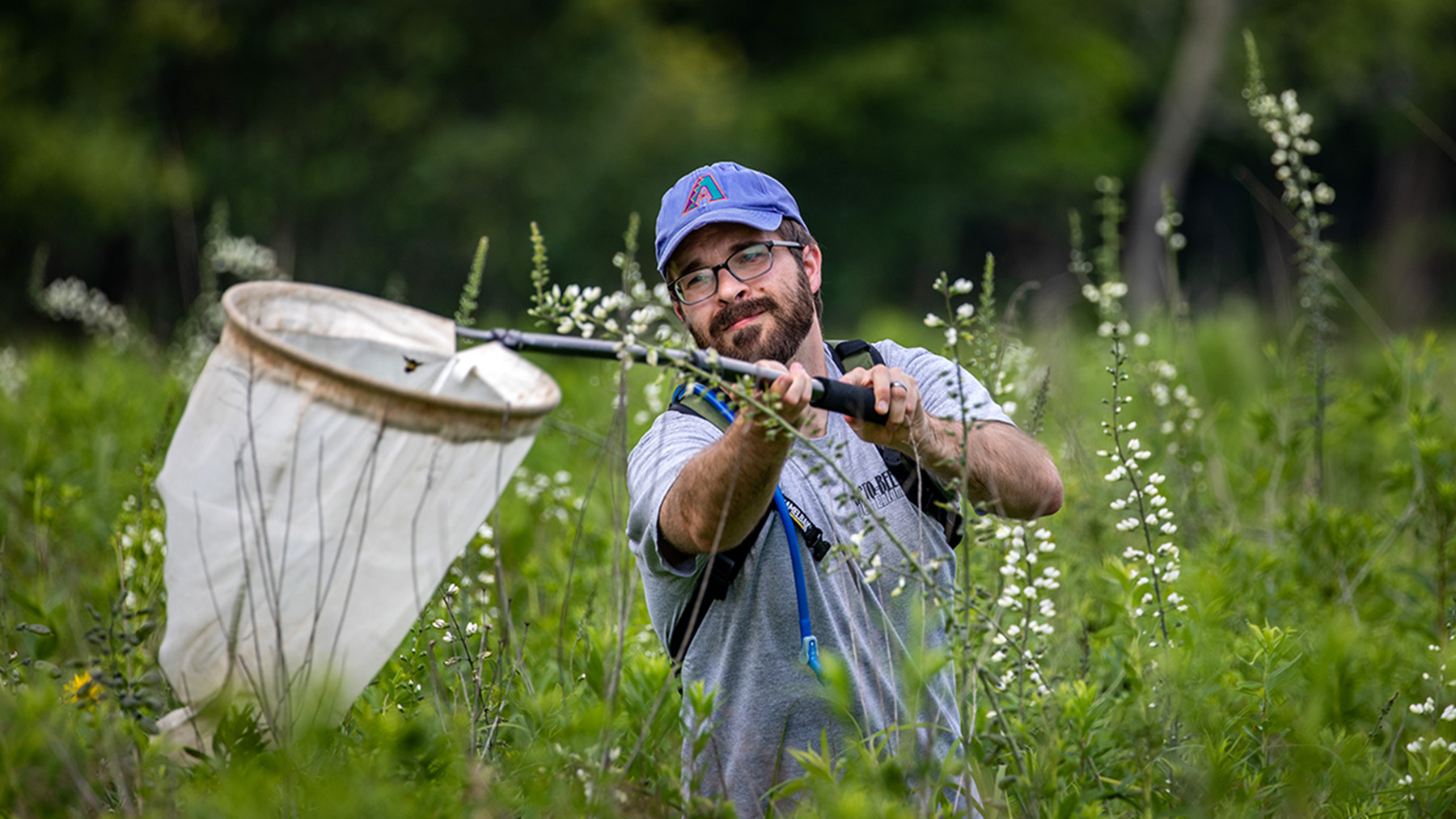 Tommy McElrath collects bees in a net. Photo by Fred Zwicky