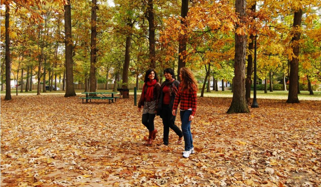 students walk through Illini Grove in the fall. Photo by L. B. Stauffer