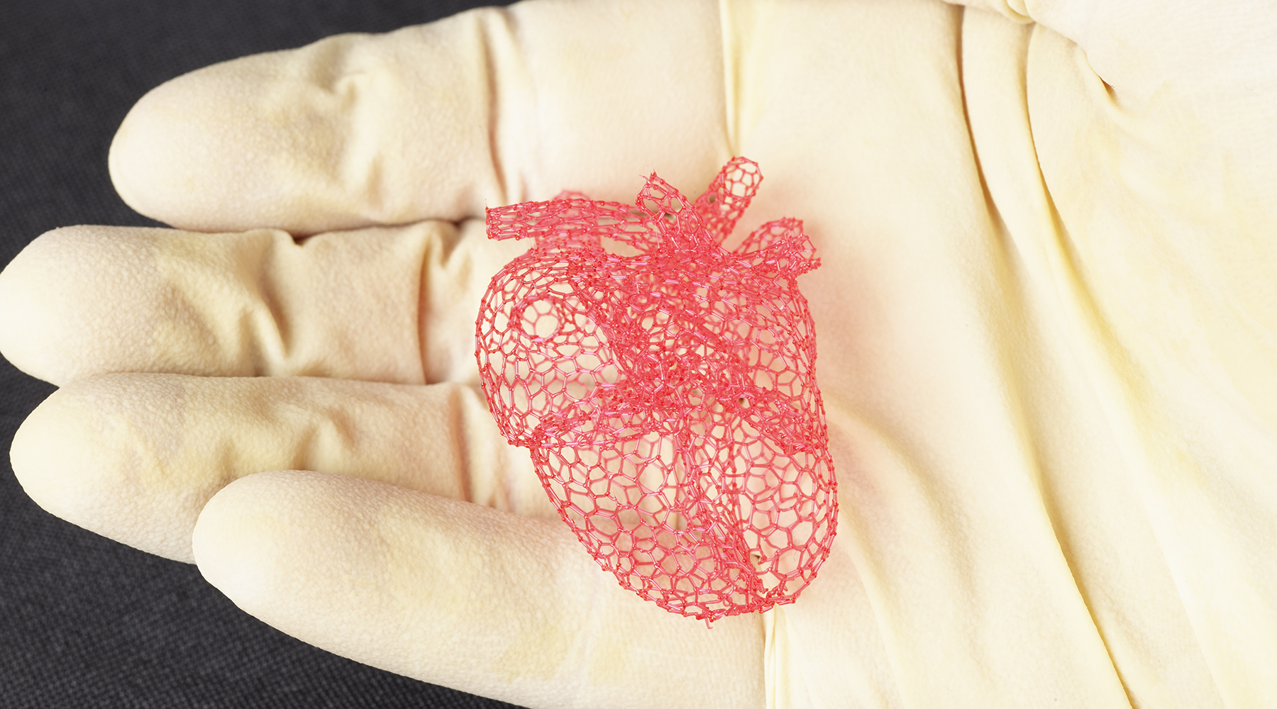 Freeform printing allows the researchers to make intricate structures, such as this model of a heart, that could not be made with traditional layer-by-layer 3-D printing. Photo by Travis Ross, Beckman Institute
