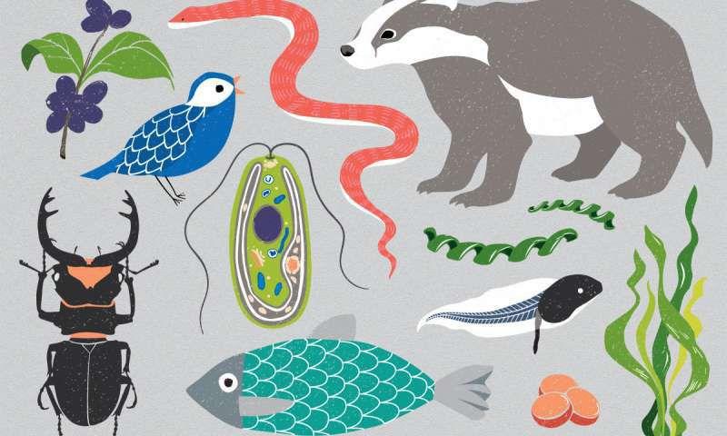 graphic image of several species by Mirhee Lee
