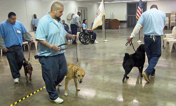 Shawnee Correctional Center inmates walk shelter dogs in a training exercise