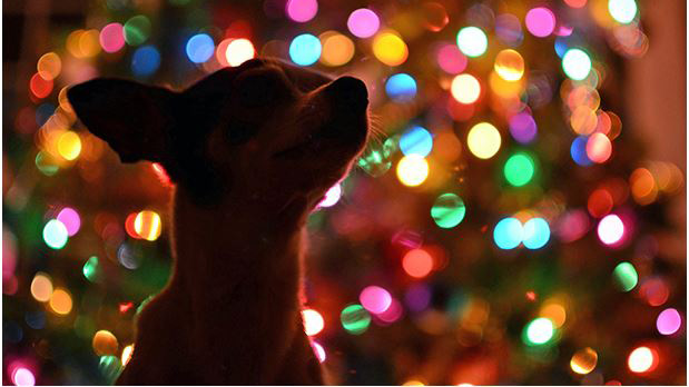 dog profile in front of holiday lights. istockphoto