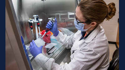 Dr. Robin Holland, a member of the campus COVID-19 research team, runs tests on saliva samples at the university's Veterinary Diagnostic Laboratory.  Photo by Fred Zwicky