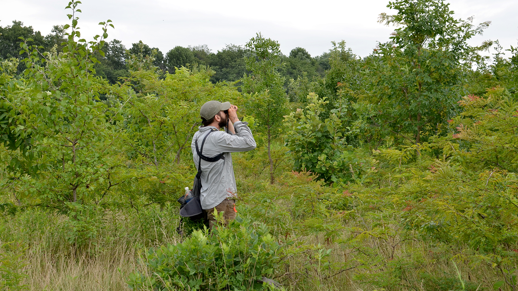 Illinois Natural History Survey avian ecologist Bryan Reiley looks for rare birds on conservation lands. Photo courtesy Bryan Reiley