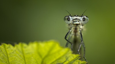 bulging eyes of a bug, Photo by Chris McLoughlin/Getty Images