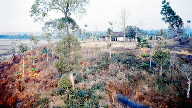 Vegetation following Agent Orange application in Vietnam. Photo by John Crivello, 1969.