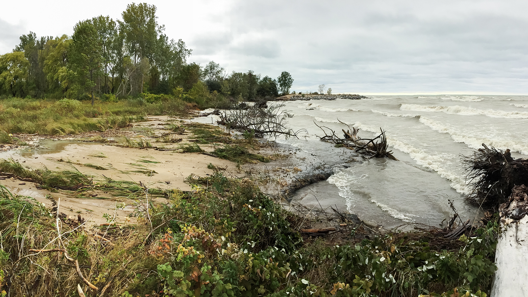 section of shoreline of Lake Michigan at Illinois Beach State Park shows erosion from wave action and covering of  beach sand