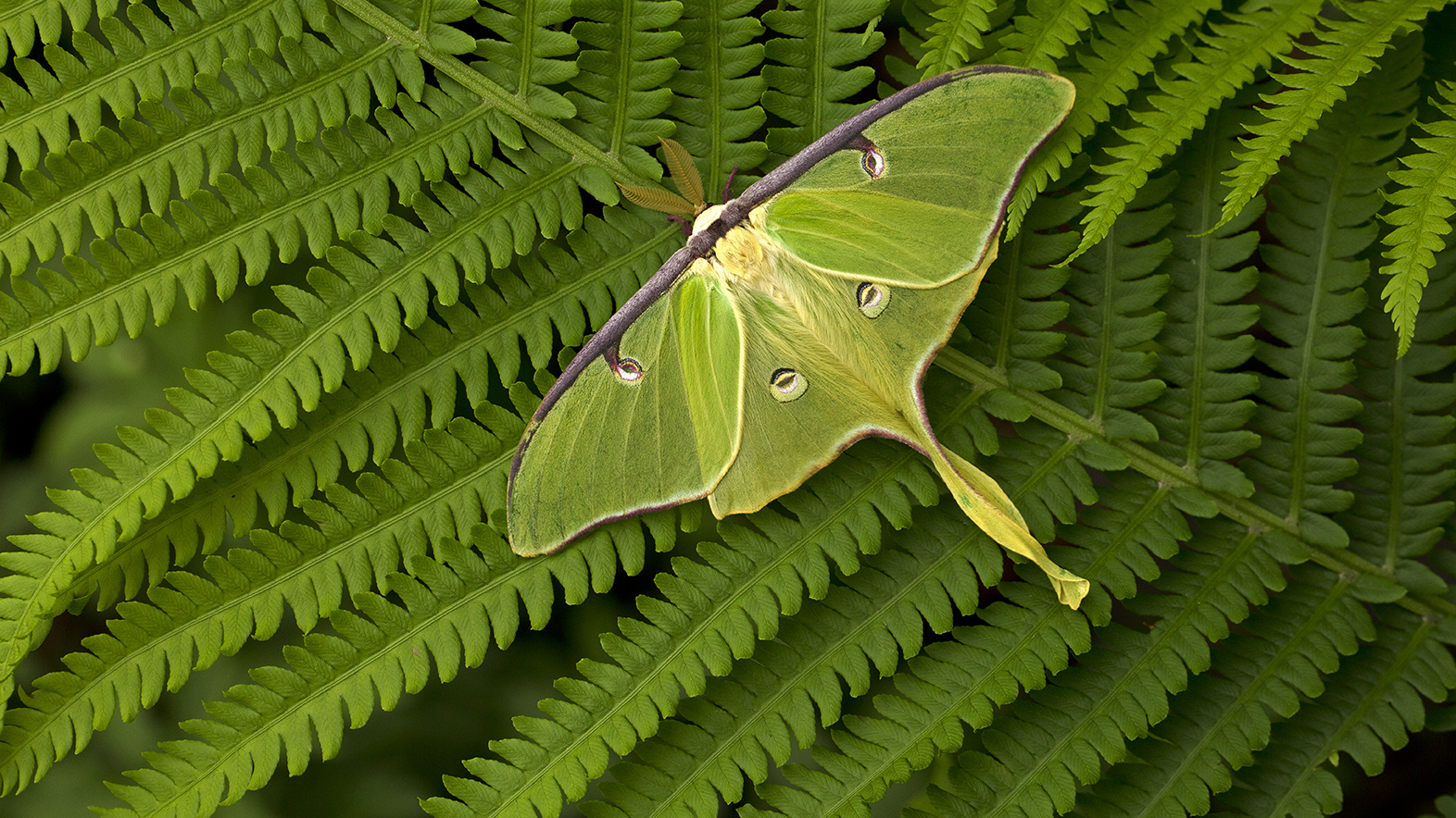 dramatic green colors of a moth sitting on a fern