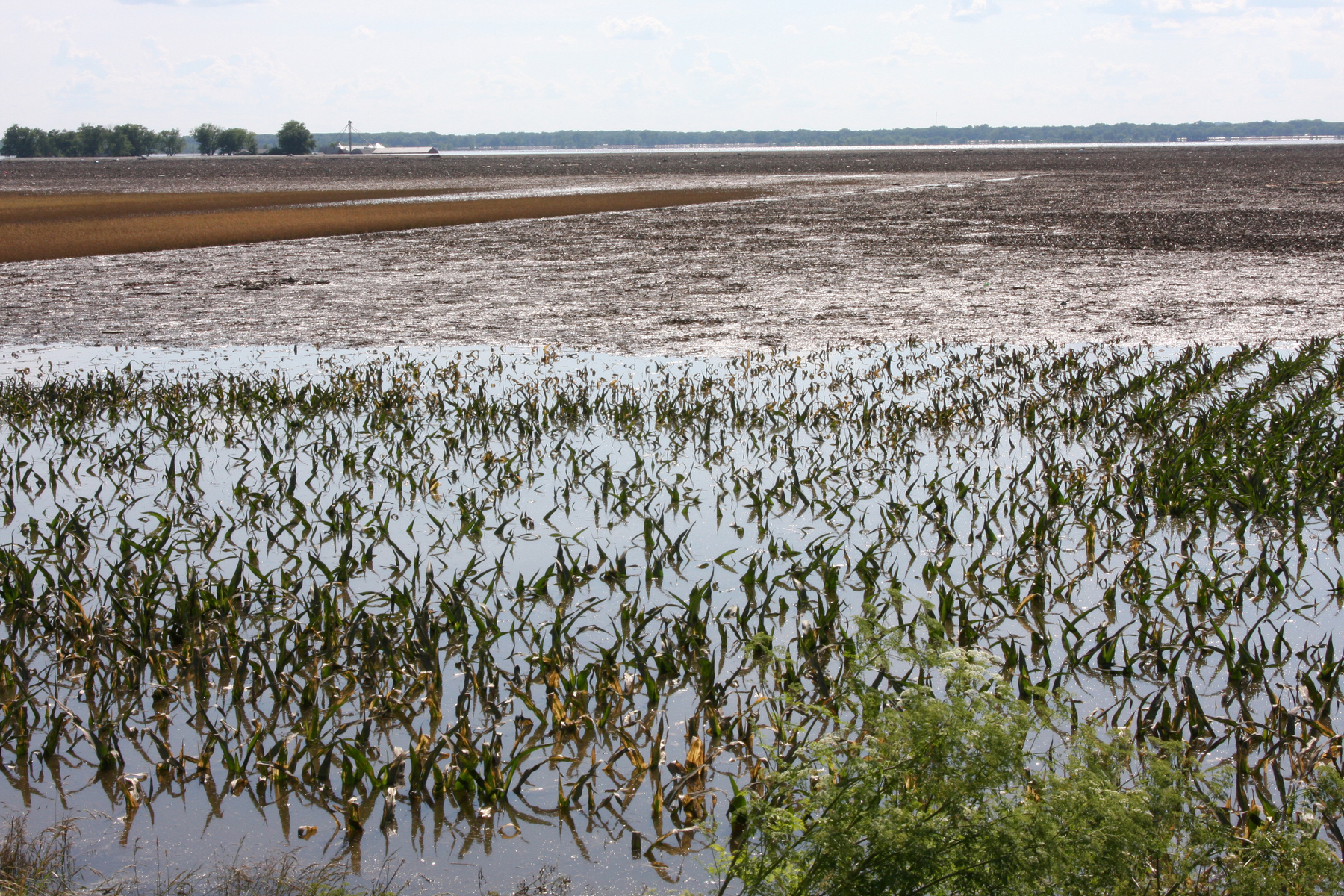 flooded field. FEMA photo via Wikimedia Commons