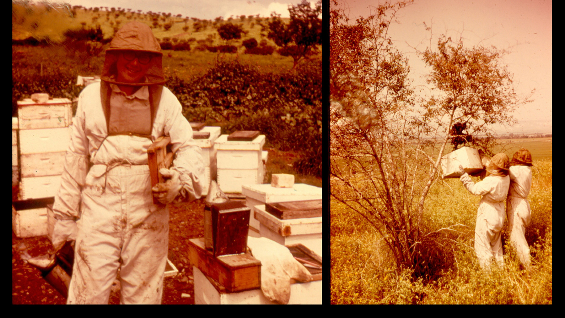 sepia-toned image of a decades-younger Gene Robinson wearing full beekeeping regalia
