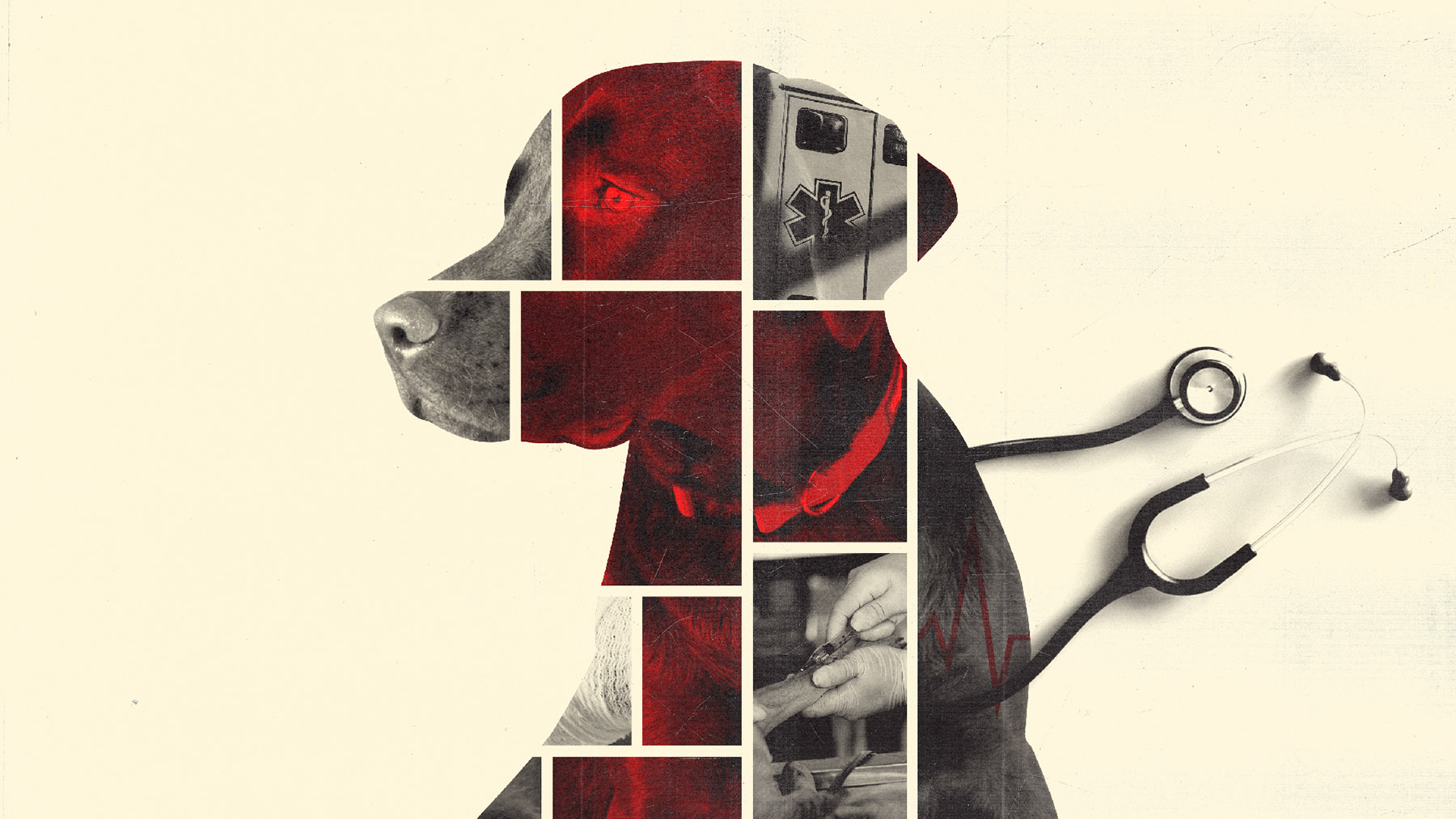 composite image of dog includes red shading and medical images. composed by Michael Vincent