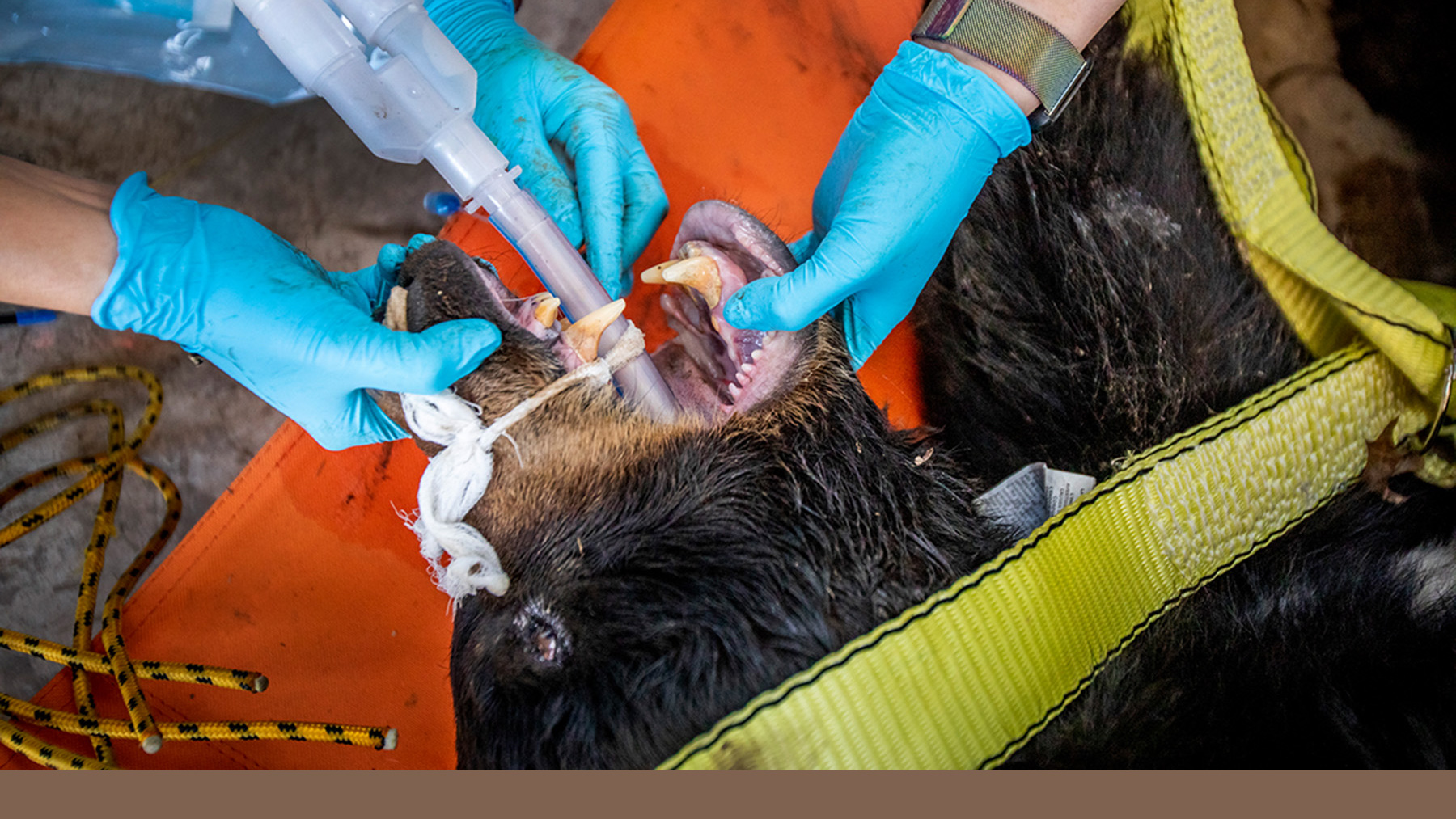 Students examine a black bear's incisors. Photo by Fred Zwicky