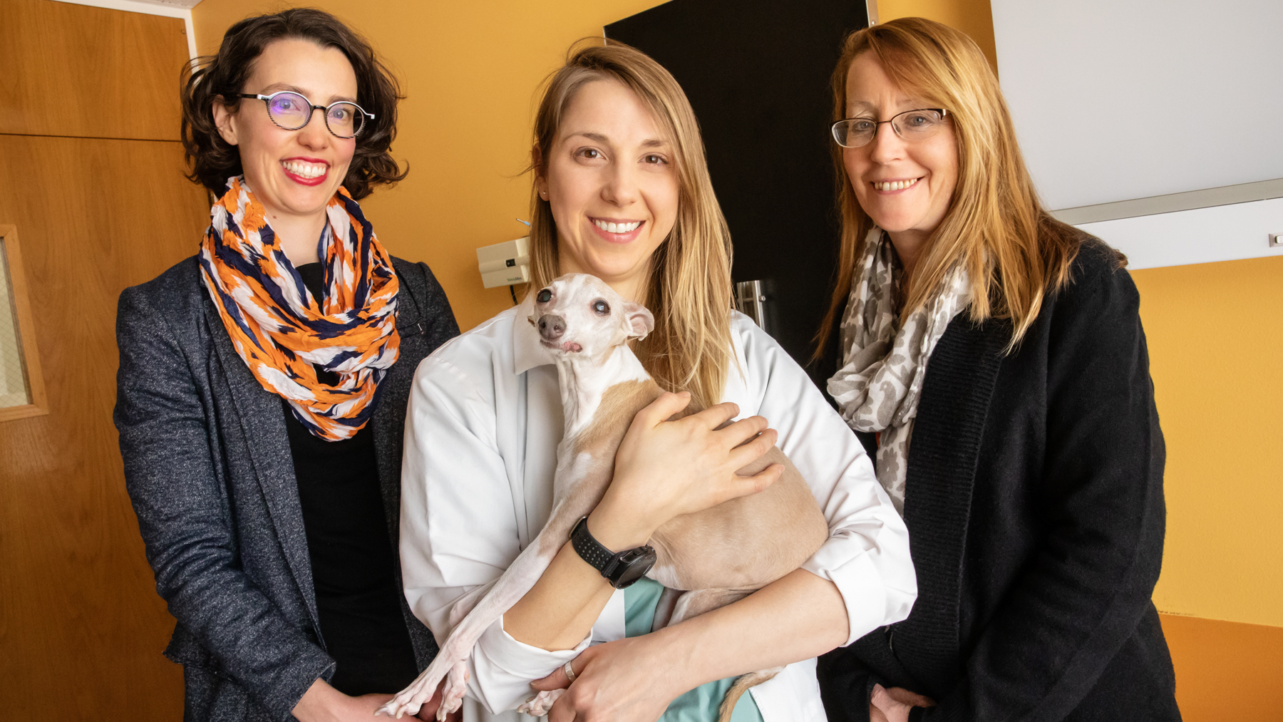 With colleagues, veterinary clinical medicine professors Dr. Ashley Mitek, Dr. Stephanie Keating and Dr. Maureen McMichael, developed an online pain management training program for veterinarians.