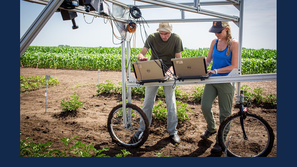 Research Technician Evan Dracup (left) and Postdoctoral Researcher Katherine Meacham-Hensold (right) screen entire research plots for high-yielding photosynthesis traits. Credit: Claire Benjamin/RIPE project