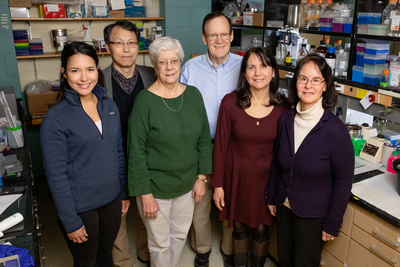 Researchers including, from left, Valeria Sanabria Guillen, Jung Soon Hoon Kim, Kathy Carlson, John Katzenellenbogen, Yvonne Ziegler, and Benita Katzenellenbogen developed new drug agents to inhibit a pathway that contributes to cancer. The compounds killed cancer cells and reduced the growth of breast cancer tumors in mice.