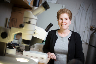 U. of I. professor of comparative biosciences Jodi Flaws and her colleagues reviewed dozens of studies exploring the relationship between exposure to environmental contaminants, the gut microbiome and human and animal health.
