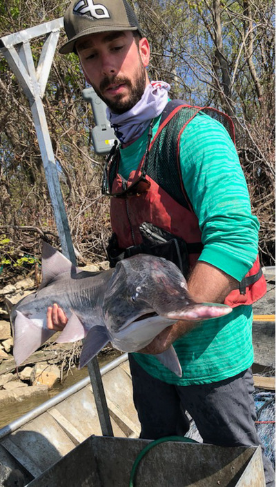 scientist holding a paddlefish near the camera
