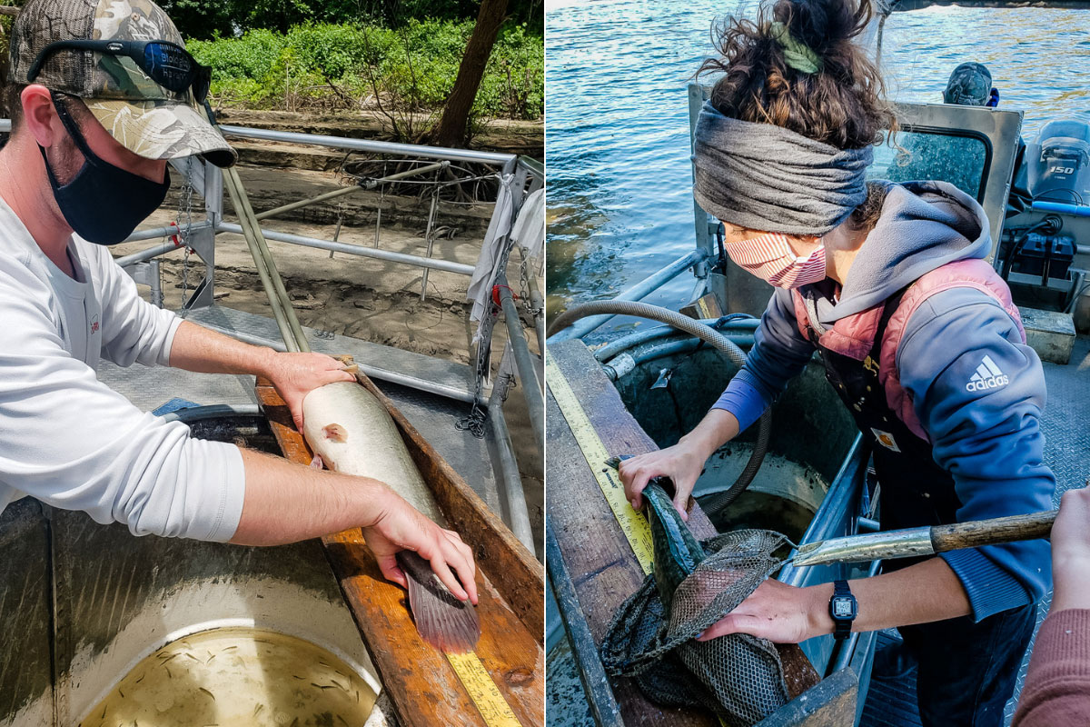 scientists measuring bowfin